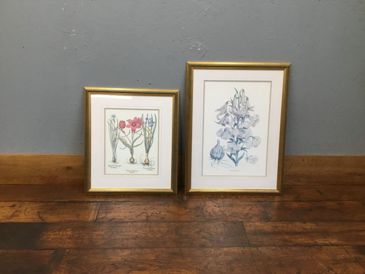 Floral Specimen Prints
