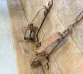 Antique Animal Traps
